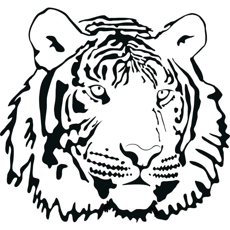 736x736 Cartoon Tiger Paw