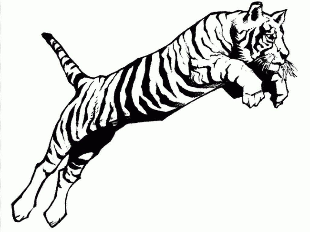 Tiger Pencil Drawing Images