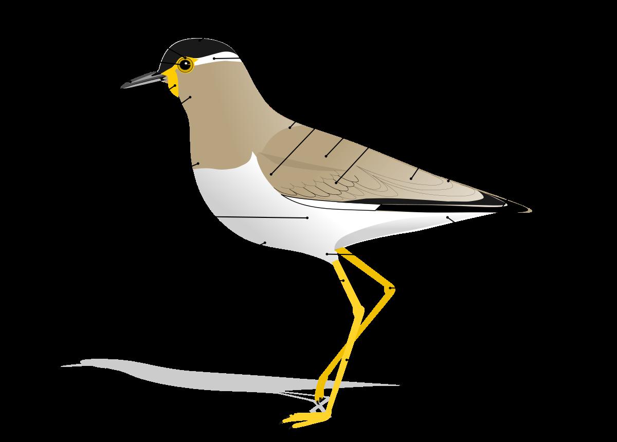 1200x860 Bird Anatomy