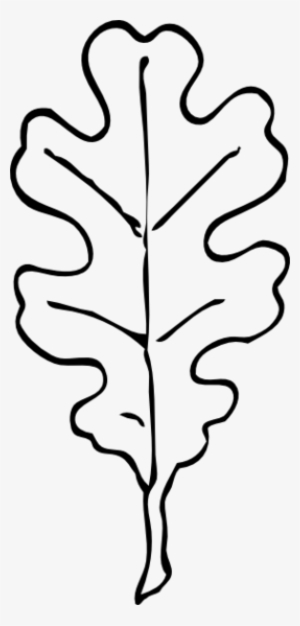 300x626 oak leaf png, free hd oak leaf transparent image