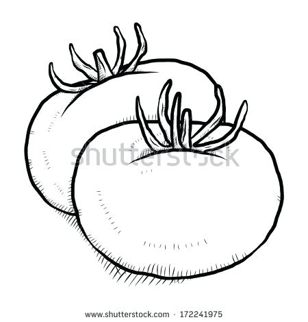 450x470 how to draw a tomato cartoon and draw of tomatoes draw tomato head