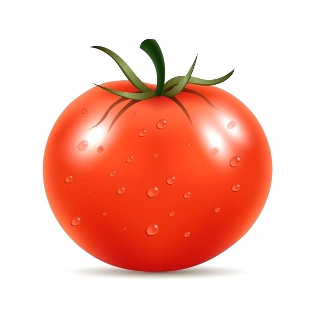 626x626 how to draw a tomato tomato drawing how to draw tomato head
