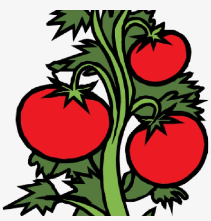820x860 vegetable garden clip art vegetable garden clipart