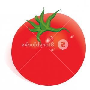 300x300 tomato vector drawing set isolated tomato sliced piece and tom gm