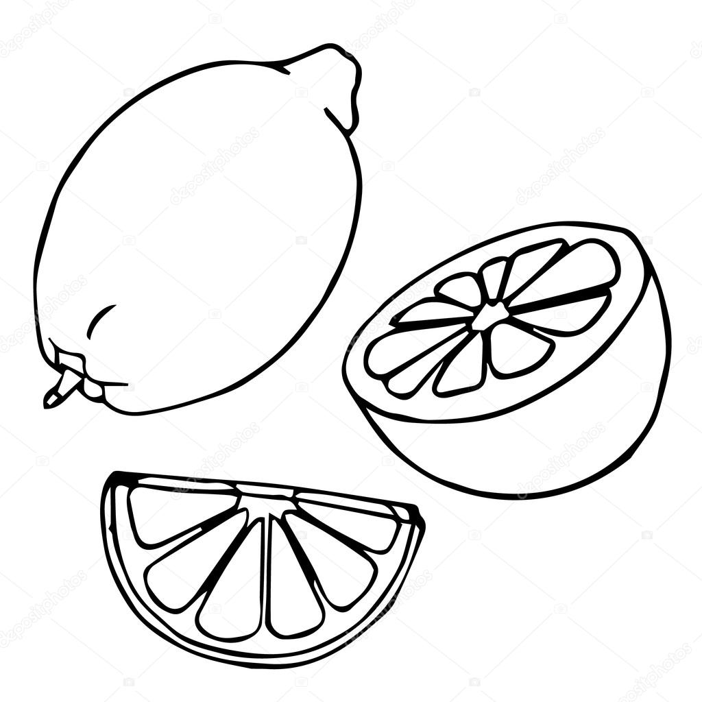1024x1024 tomato drawing half tomato for free download