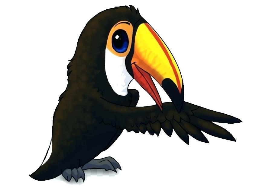 900x640 How To Draw A Tucan Image Easy Way To Draw Toucan