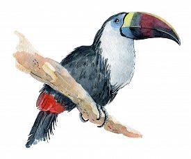 275x229 Toucan Drawing Photos And Images Crystalgraphics
