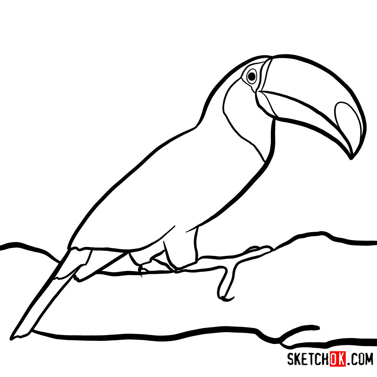 1200x1200 How To Draw A Toucan Birds
