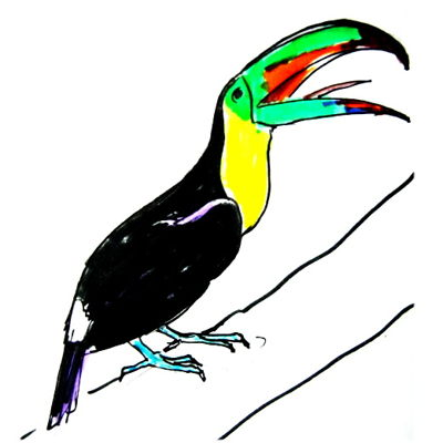 400x400 How To Draw A Toucan