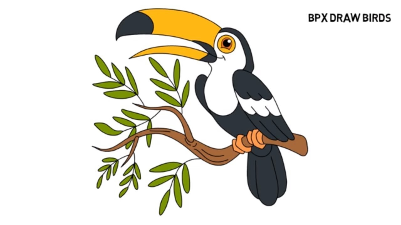 1280x720 How To Draw And Color Toucan Bird Bird Drawing Coloring