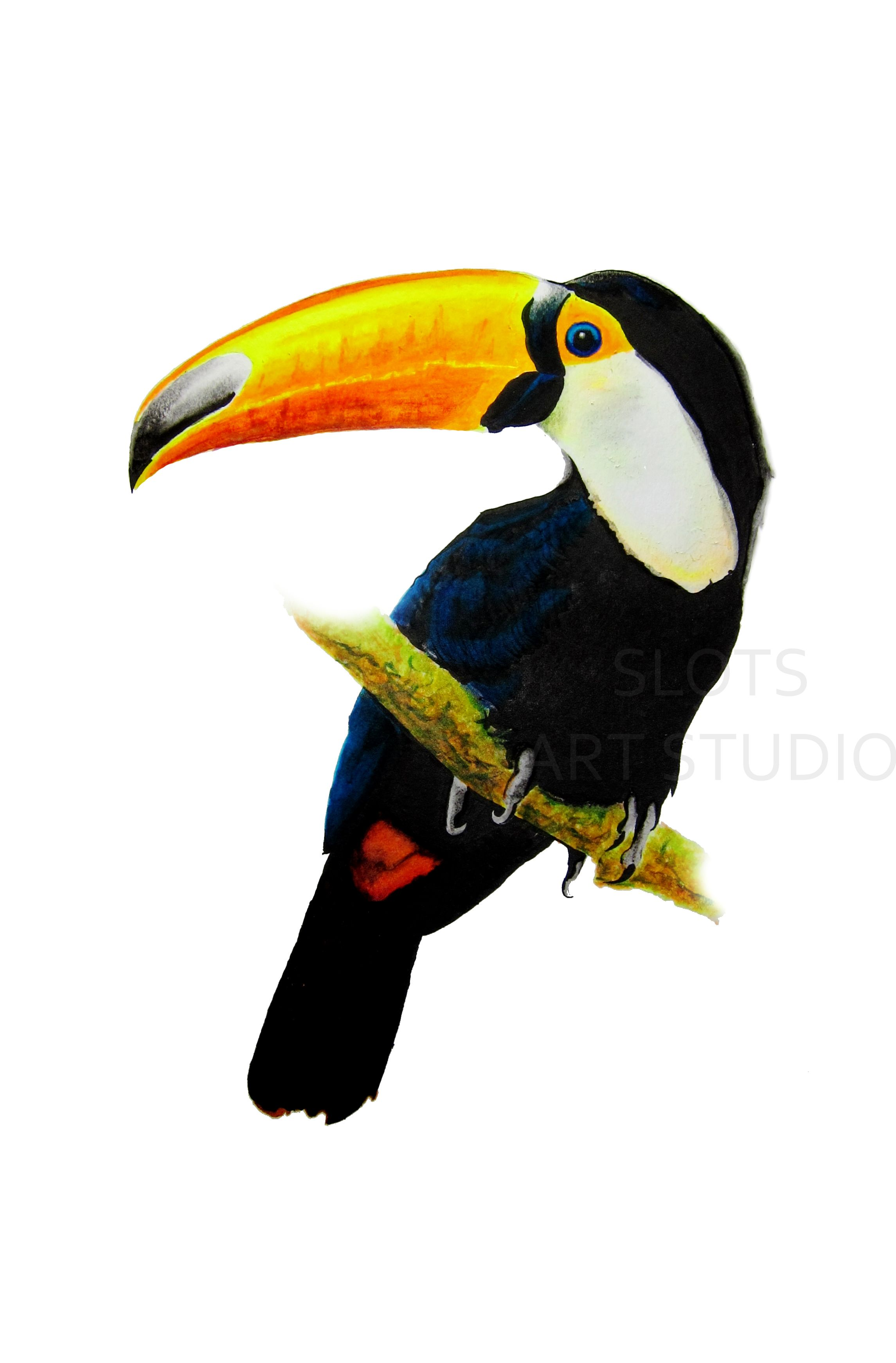 2290x3483 Toucan I Chose A Toucan With A Warm Coloured Nose Rather Than