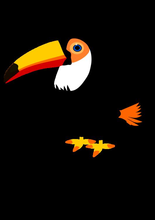 530x750 Toco Toucan Bird Istock Drawing Cc0