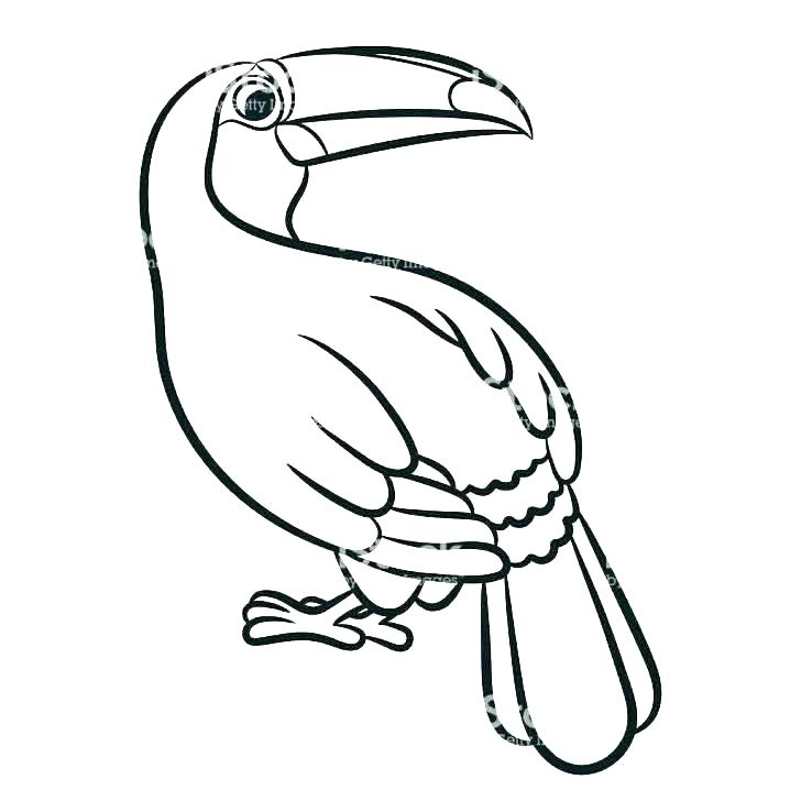 728x728 Toucan Coloring Bird On The Tree Sheet