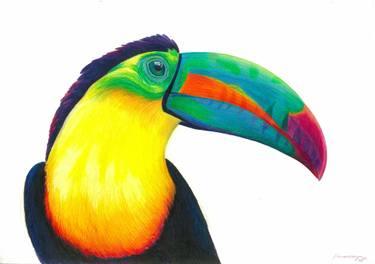 375x264 Toucan Drawing