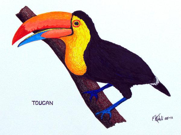 600x449 Toucan Drawings Fine Art America
