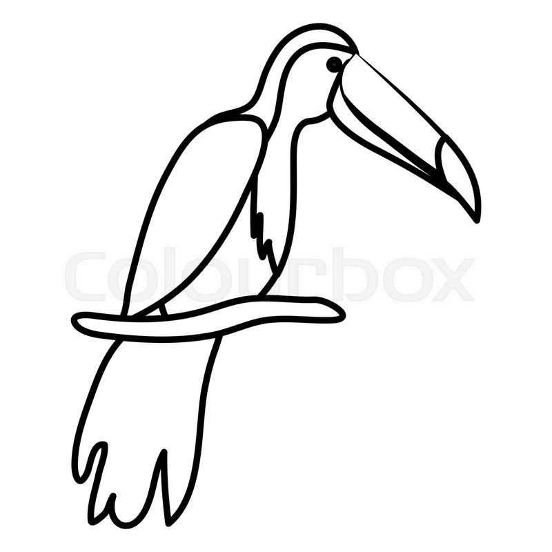 800x800 Toucan Exotic Bird Icon Vector Stock Vector Colourbox