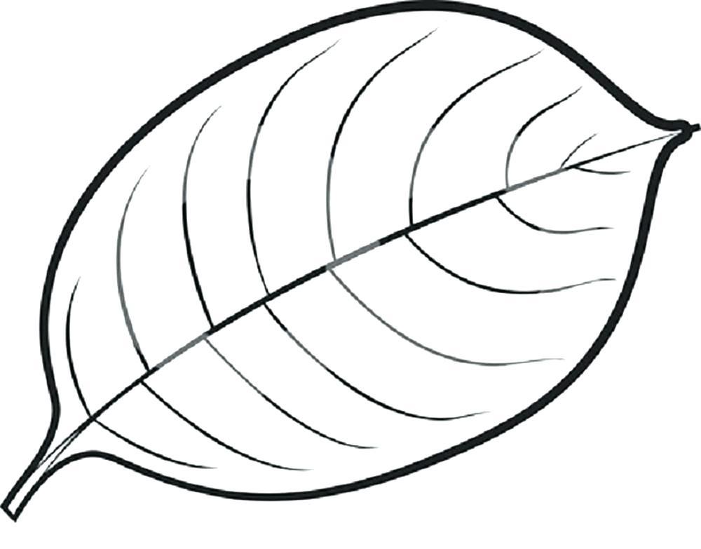 1000x783 Drawing Leaf
