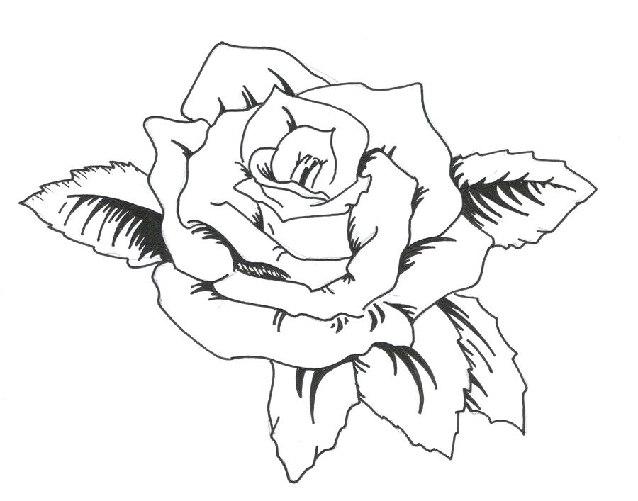 900x707 Roses Tattoo Outline Simple Rose Outline Drawing Free Coloring