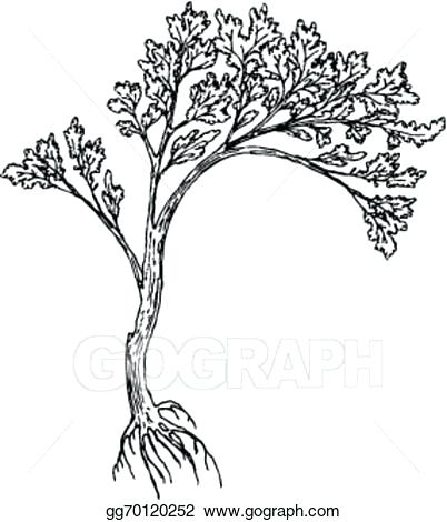 402x470 drawing of a tree with roots big tree with roots tree roots