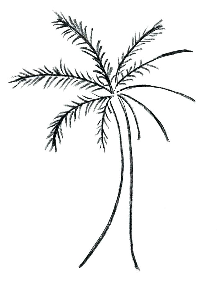 700x940 easy palm tree easy palm tree drawing easy palm tree drawing
