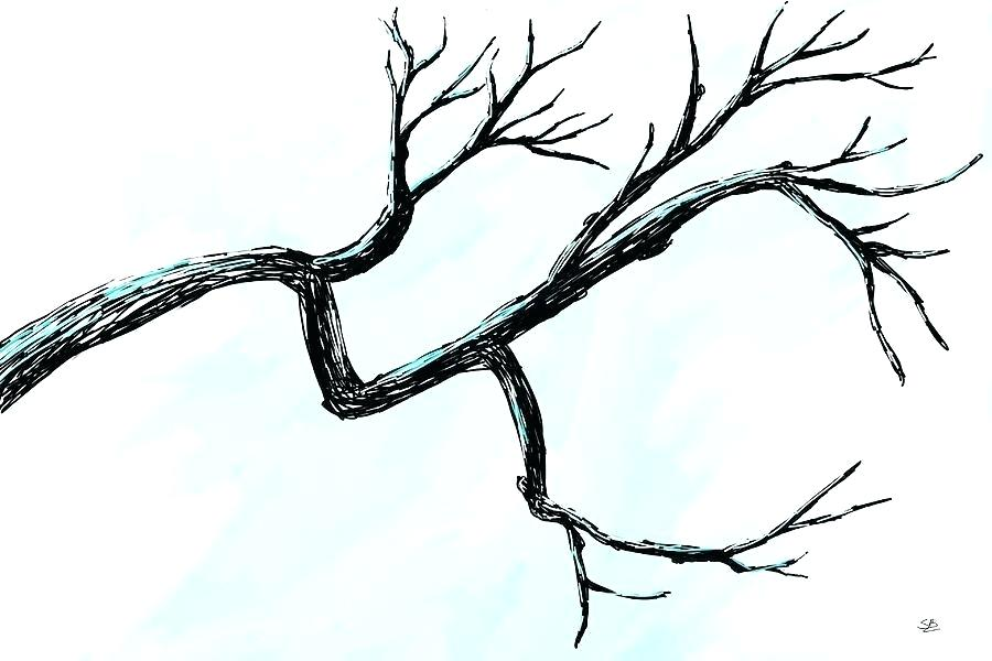 900x600 drawing tree branches easy drawing tree branches