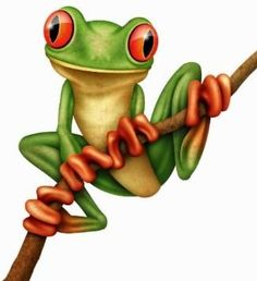 Tree Frog Drawing