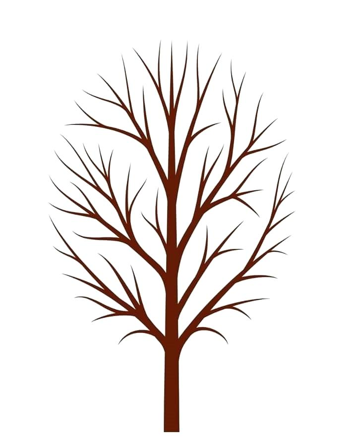 Tree No Leaves Drawing Free Download Best Tree No Leaves