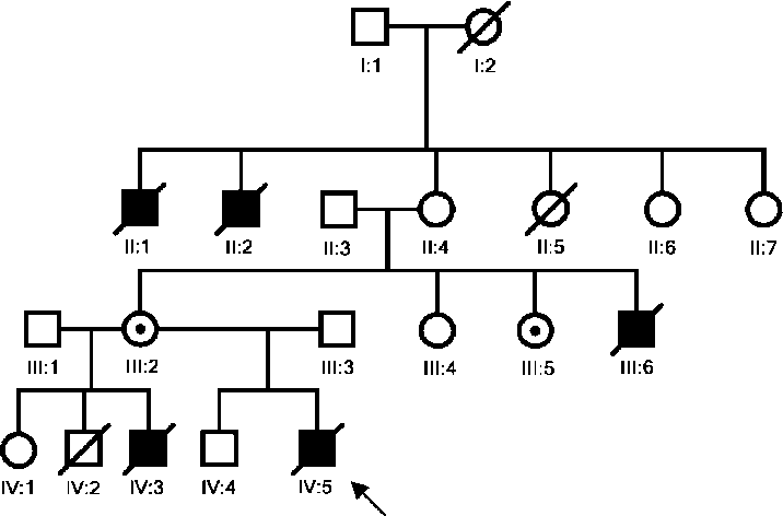 716x472 family tree of the year old patient the index patient