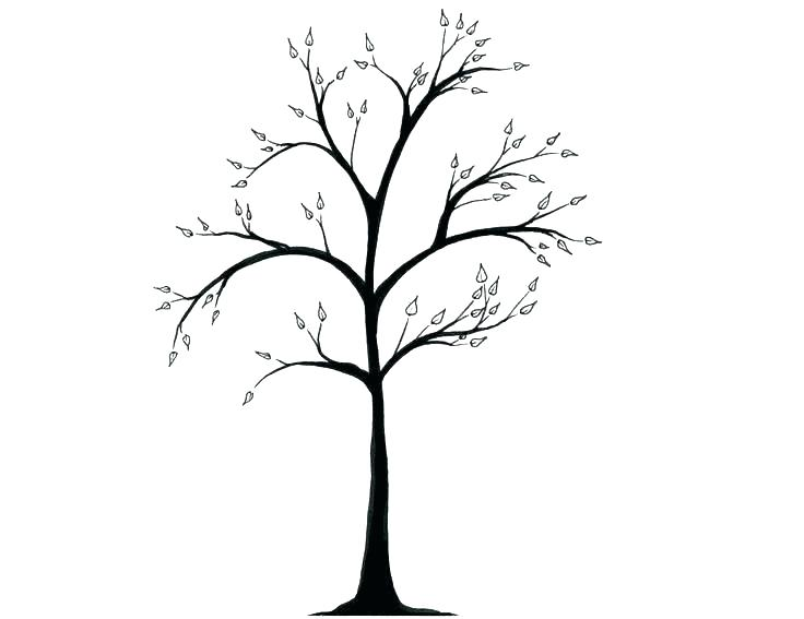 736x567 tree trunk outline two tree trunk outline drawing