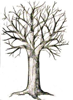 Tree With Swing Drawing