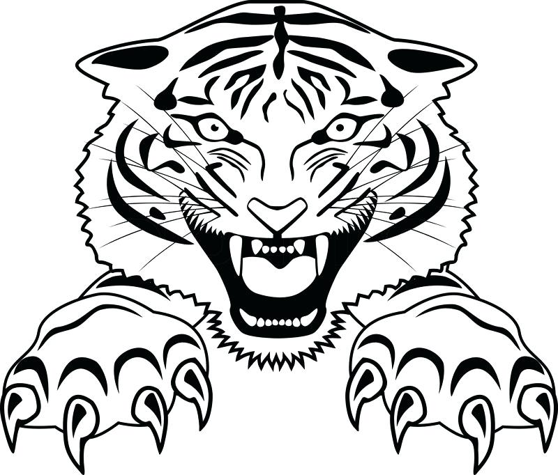 800x682 drawings of tigers tiger drawing drawings of tigers and lions