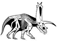 236x169 Best Dinosaur Skeletonsfossilsanatomy Images