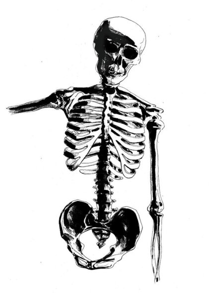 427x600 Skeleton Drawings Fine Art America