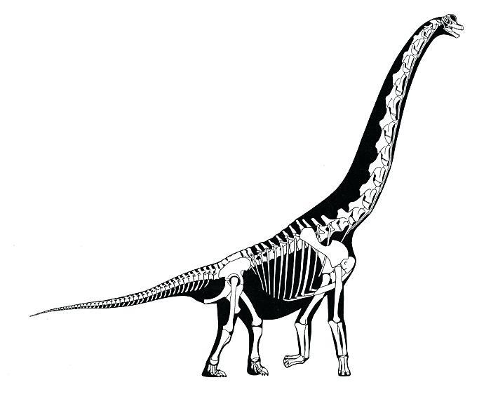 700x562 Dinosaur Bones Drawing