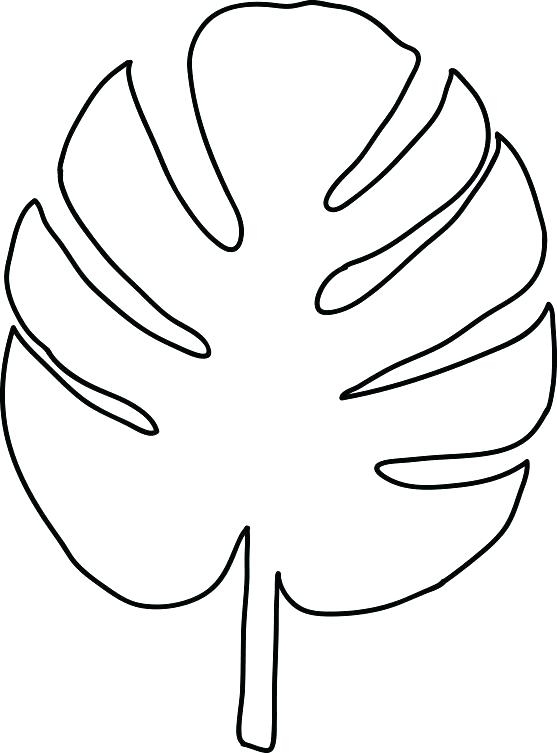 Tropical Leaves Drawing