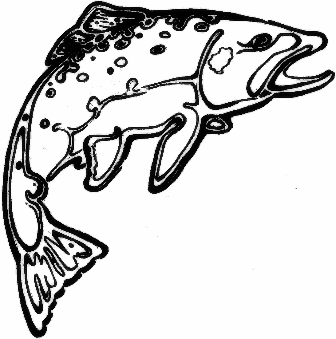 1093x1103 trout drawing brook trout for free download