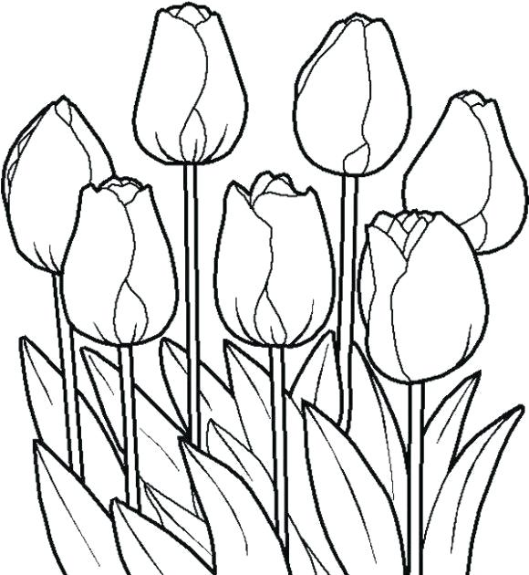 580x630 tulip flower drawing how to draw a beautiful tulip tulip flower