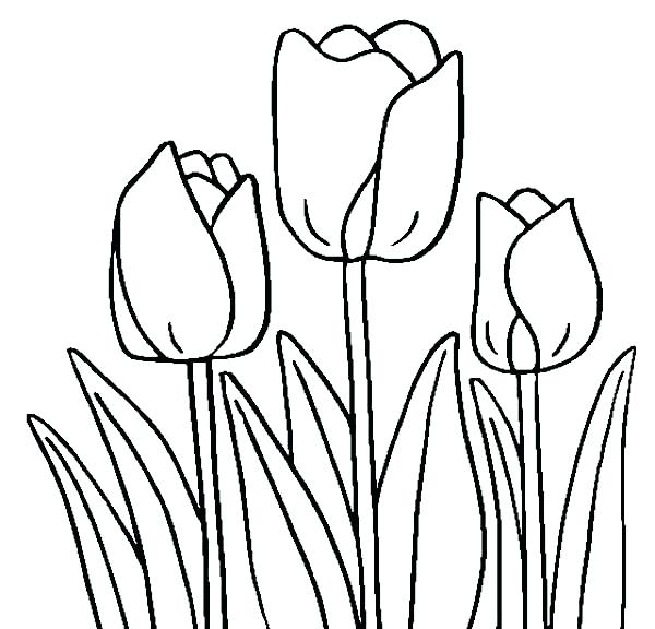600x576 tulips drawings tulips tulip line drawing abstract