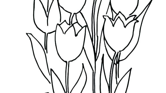 585x329 tulips coloring pages drawing tulip coloring pages tulips flower