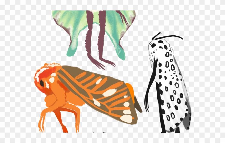 880x561 Moth Clipart Tumblr Transparent