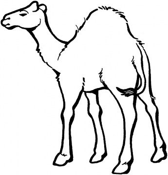 345x360 drawings of camels camels coloring pages super coloring