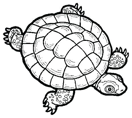 464x416 Green Sea Turtle Drawing Clip Art Outline Download Png Mebelmag