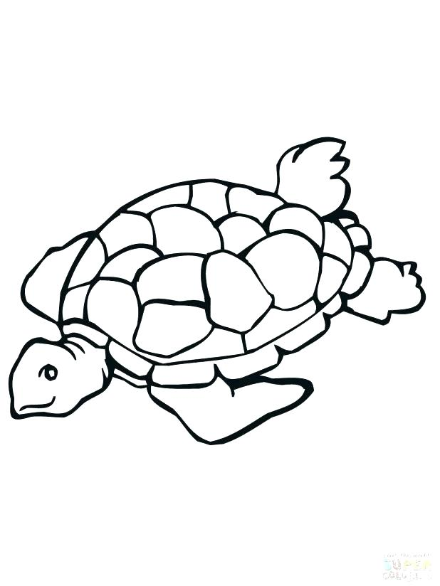 618x824 Printable Turtle Coloring Pages Outline Of Drawing Turtles Step
