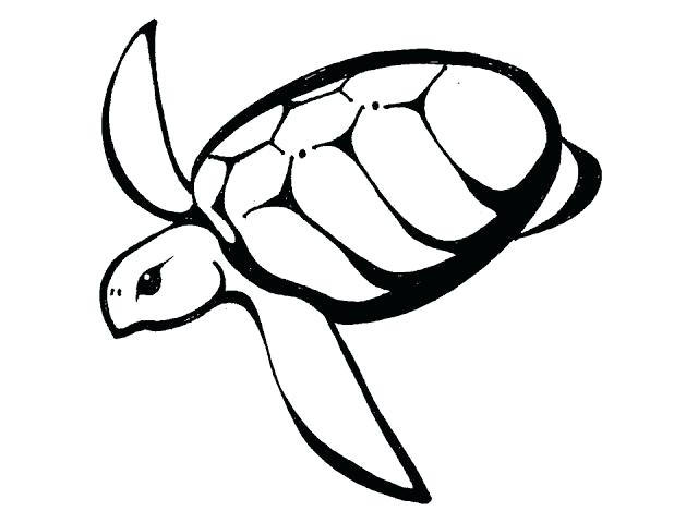 640x480 Sea Turtle Outline Printable Best Turtles Images On Tattoo Drawing