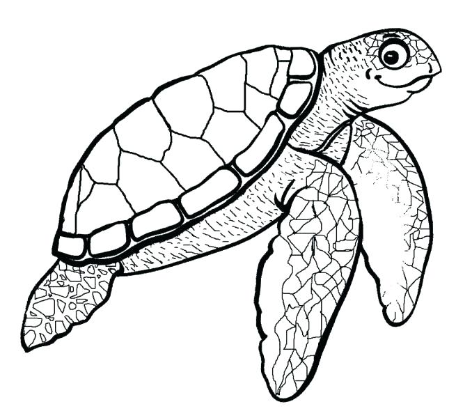 678x600 Sea Turtle Outline Sea Turtle Drawing Pictures How To Draw