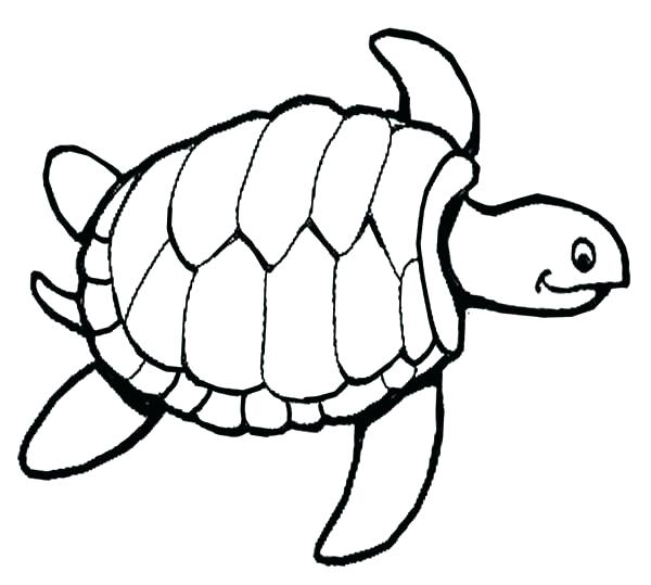 photo about Turtle Template Printable referred to as Turtle S Routine Drawing Absolutely free obtain excellent Turtle