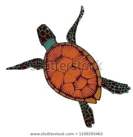 450x461 drawing of sea turtle draw turtle body drawing green sea turtle