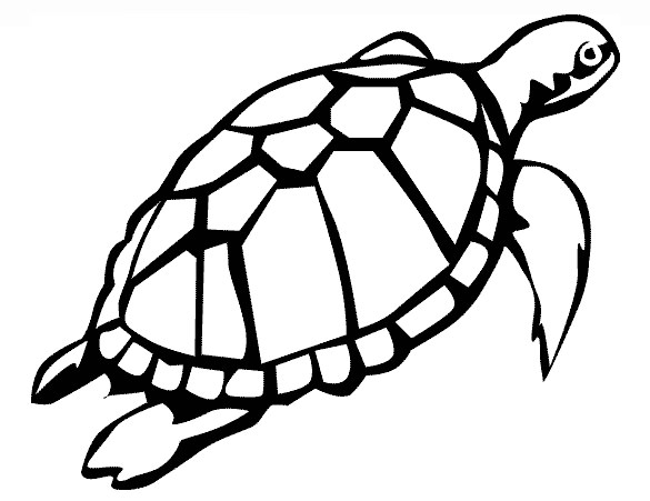 Turtle Swimming Drawing
