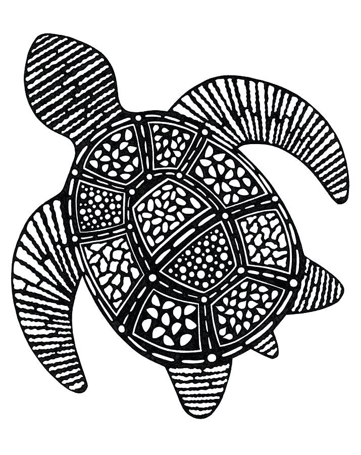 715x900 sea turtle drawing sea turtle drawing sea turtle drawing steps