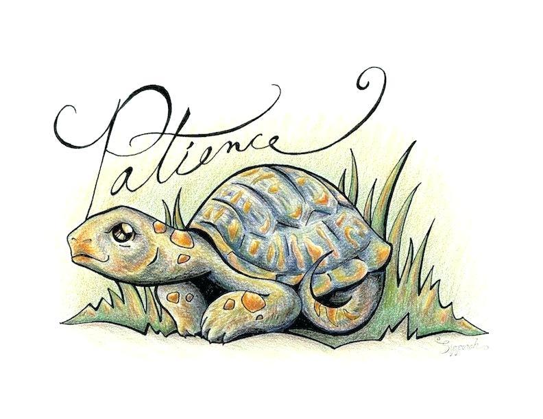 792x612 turtle illustrations turtle tattoo illustrations